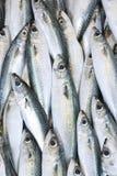 Fische Stockbild