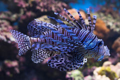 Fische Stockfotos