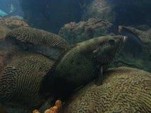 Fische Lizenzfreie Stockfotos