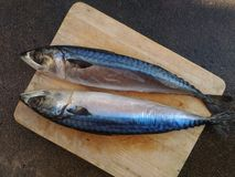 Fische Lizenzfreie Stockfotografie