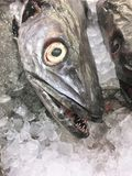 Fische, Abschluss oben Stockfotos
