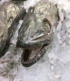 Fische, Abschluss oben Stockbilder