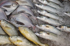 Fische angezeigt auf Eis. Lizenzfreie Stockfotografie