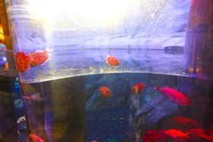 Fische - Aquarium Dubai stockbilder