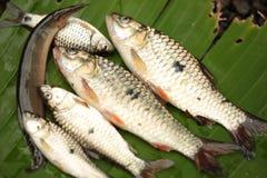 Fische auf Bananenblattgrün Lizenzfreies Stockbild