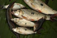 Fische auf Bananenblattgrün Stockfoto