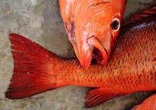 Fische auf dem Boden Lizenzfreie Stockfotografie