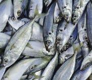 Fische auf dem Markt Lizenzfreie Stockfotos
