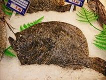 Fische auf dem Markt in Marbella in Spanien Lizenzfreie Stockfotografie