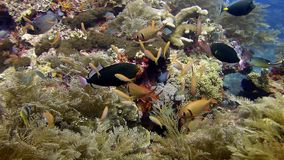 Fische auf dem Riff Stockfotografie