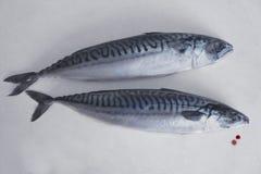 Fische auf dem Tisch Lizenzfreie Stockfotografie