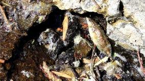 Fische auf dem Ufer stock footage