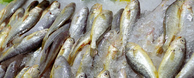 Fische auf dem Verkauf Lizenzfreies Stockbild