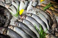 Fische auf dem Zähler auf Eis Lizenzfreie Stockfotografie