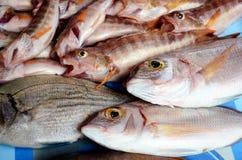 Fische auf einem Behälter Lizenzfreie Stockbilder