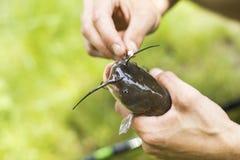 Fische auf einem Haken Lizenzfreies Stockfoto