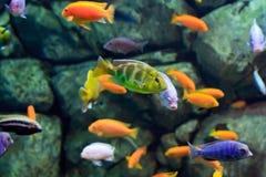 Fische auf einem Korallenriff Unterwasser Stockfotografie