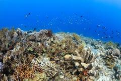 Fische auf einem tropischen Korallenriff Stockfotos