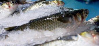 Fische auf Eis stock video