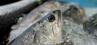 Fische auf Eis stock footage