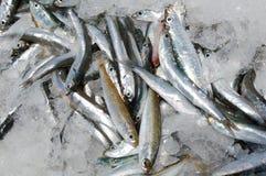 Fische auf Eis Stockbild