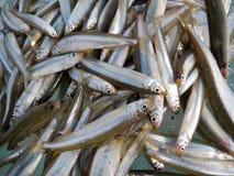Fische auf Eis   Lizenzfreies Stockbild