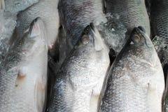 Fische auf Eis Lizenzfreie Stockbilder