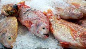 Fische auf Eis lizenzfreie stockfotografie