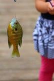 Fische auf Haken Stockfotos