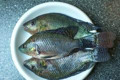 Fische auf Platte Stockfotografie