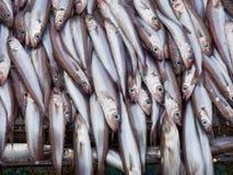 Fische auf Plattformfabrikbehälter Lizenzfreie Stockfotografie