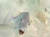 Fische auf sandigem Meeresgrund lizenzfreie stockbilder