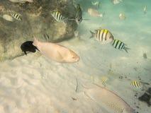 Fische auf sandigem Meeresgrund stockfotografie