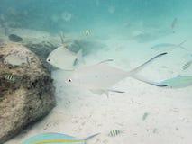 Fische auf sandigem Meeresgrund lizenzfreie stockfotografie
