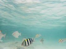 Fische auf sandigem Meeresgrund lizenzfreies stockfoto
