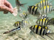 Fische auf sandigem Meeresgrund stockfoto