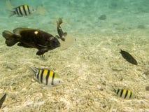 Fische auf sandigem Meeresgrund stockfotos