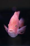 Fische auf schwarzem Hintergrund Stockfoto