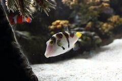 Fische in Auqarium Stockfotos