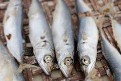 Fische aus Wasser heraus Lizenzfreies Stockbild