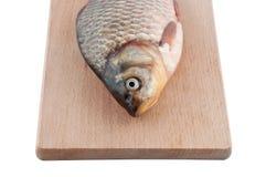Fische an Bord. Stockbild