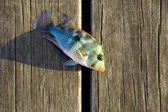 Fische an Bord Stockfotos