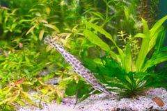 Fische in den Algen stockbild