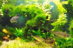 Fische in den Algen lizenzfreies stockfoto