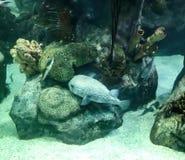 Fische an den Felsen Lizenzfreie Stockbilder