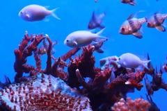Fische in den Korallen stockbild