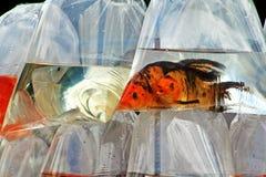 Fische in den Taschen Stockbild