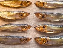 Fische der geräucherten Heringe Köstliche geräucherte Fische auf der Leinwand Stockbild