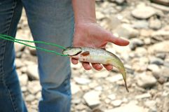 Fische in der Hand Lizenzfreie Stockbilder