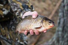 Fische in der Hand Stockfotos